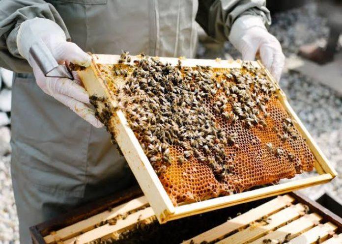 मधुमक्खी पालन व्यापार कैसे शुरू करे