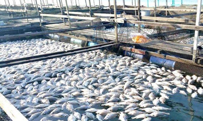 मछली पालन व्यवसाय
